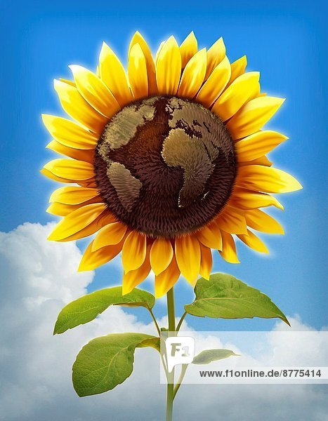 Illustrative image of sunflower with globe imprint representing global care.