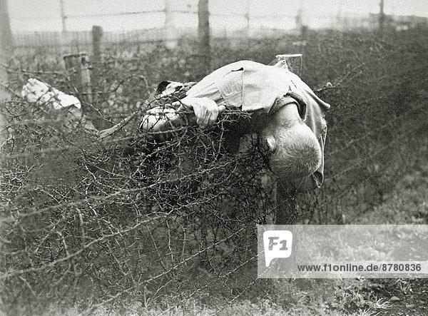 Leiche  Stacheldraht  Geschichte  Zaun  Krieg  Deutschland  Gefangener  Zweiter Weltkrieg  II. Weltkrieg