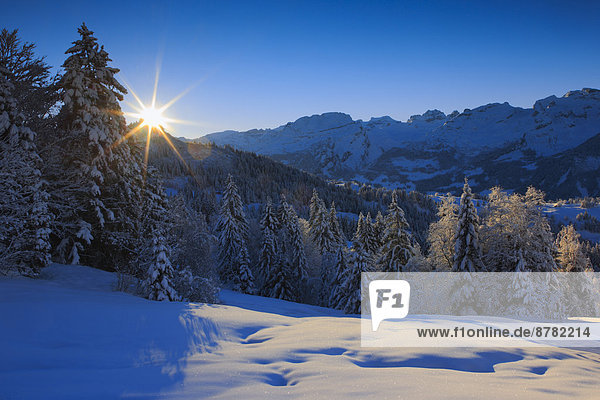 Kälte Panorama sternförmig Europa Schneedecke Berg Winter Baum Himmel Sonnenaufgang Schnee Wald Holz Berggipfel Gipfel Spitze Spitzen Alpen blau Ansicht Sonnenstrahl Fichte Tanne Westalpen Sonne schweizerisch Schweiz Schweizer Alpen Zentralschweiz