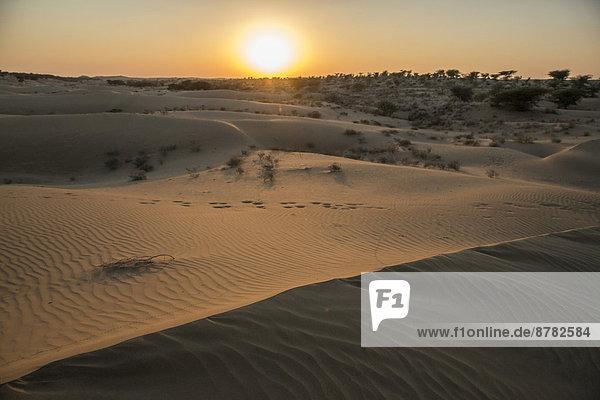 Landschaftlich schön  landschaftlich reizvoll  Sonnenaufgang  Wüste  Asien  Indien  Rajasthan
