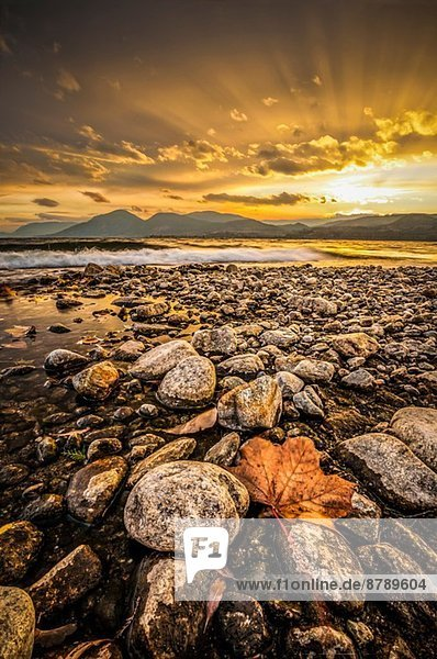 Ahornblatt und Felsenküste Okanagan Lake  Naramata  British Columbia  Kanada