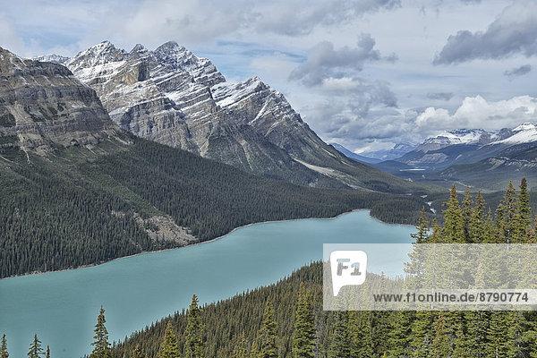 Nationalpark  Berg  Landschaft  niemand  See  Landschaftlich schön  landschaftlich reizvoll  Natur  Herbst  Nordamerika  UNESCO-Welterbe  Rocky Mountains  Peyto Lake  Columbia-Eisfeld  Columbia Icefield  Alberta  Banff  Kanada