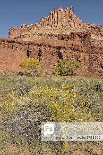 Vereinigte Staaten von Amerika  USA  Nationalpark  Felsbrocken  Hochformat  Amerika  Palast  Schloß  Schlösser  Landschaft  niemand  Süden  Sehenswürdigkeit  Capitol Reef Nationalpark  Colorado Plateau  Sandstein  Utah