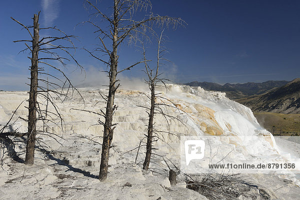 America  Wyoming  USA  United States  Yellowstone  National Park  UNESCO  World Heritage  nature  mammoth  hot spring  terrave  spring  thermal  volcanic