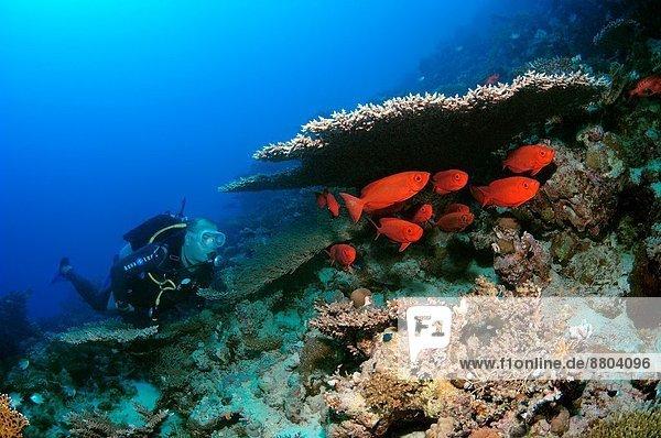 Mondschein  Schwanz  Tierschwanz  Afrika  Ägypten  Rotes Meer