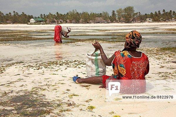Ostafrika  Farbaufnahme  Farbe  Frau  Strand  aufheben  Kleid  Tansania