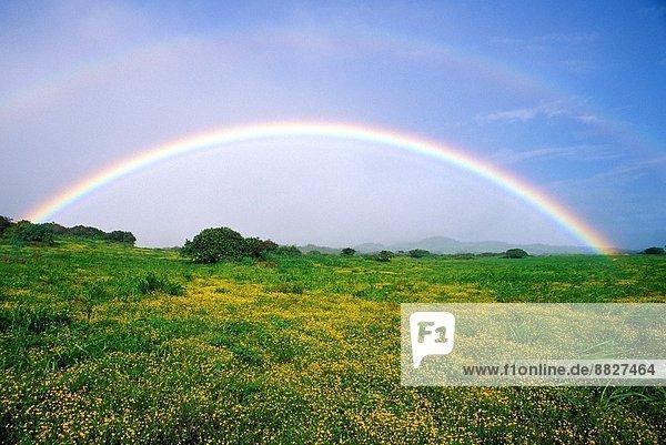 Berg  über  Wildblume  Regenbogen