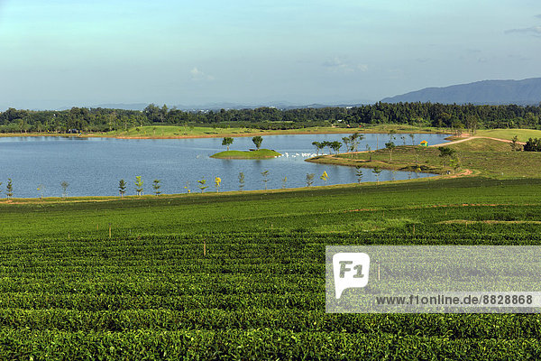 Boon Rawd Farm  Singha Park  Teeplantagen mit See  Gartenanlagen  Chiang Rai  Provinz Chiang Rai  Nordthailand  Thailand