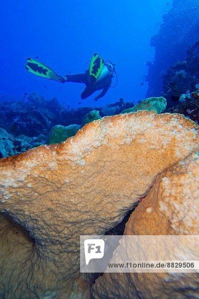 Coral Reef  Hard Coral  Bunaken National Marine Park  Bunaken  North Sulawesi  Indonesia  Asia.