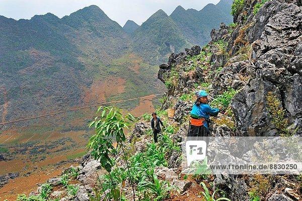Mais  Zuckermais  Kukuruz  Frau  arbeiten  Wachstum  Boden  Fußboden  Fußböden  Südostasien  steil