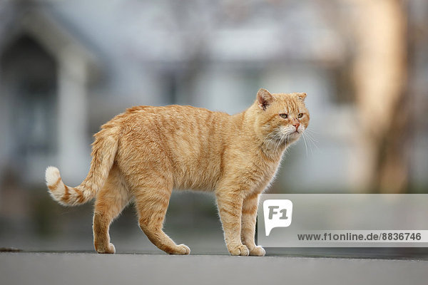 Tomboy auf der Straße stehend