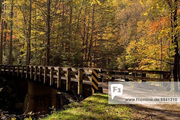 Bridge  Autumn  Tremont  Great Smoky Mountains National Park  TN