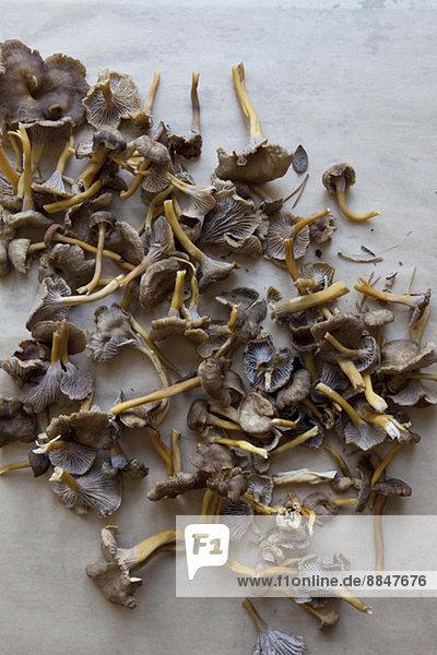 Getrocknete Pilze auf dem Boden