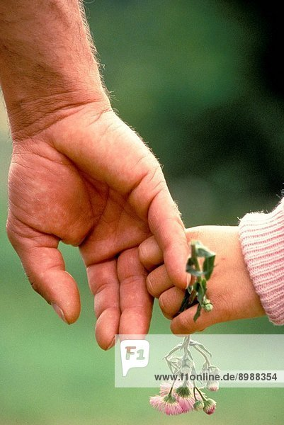 Small Child'S Hand Holding Larger Hand Of Adult And Flower. Close_Up.