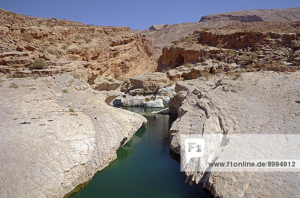 Teich mit grünem Wasser  umgeben von Wüstenfelsen  Wadi Bani Khalid  Muqal  Ash Sharqiyah  Oman