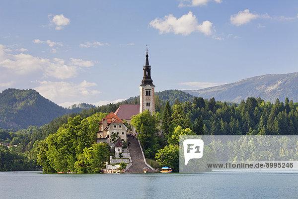 Bleder Insel mit Marienkirche  Bleder See  Bled  Slowenien