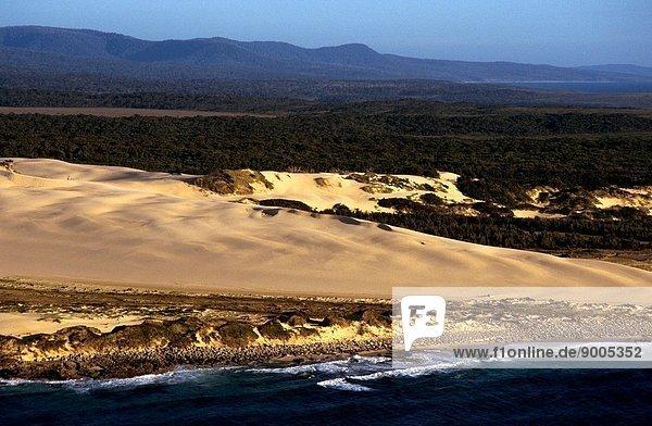 Sand dunes near Gabo Island Croajingolong National Park  East Gippsland  Victoria  Australia