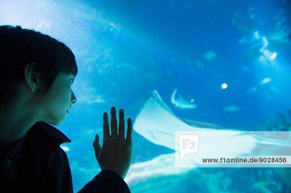 Junge bewundert Meeresleben im Aquarium
