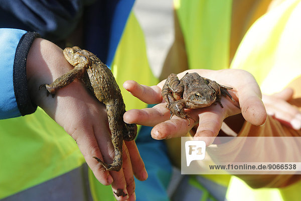 Girl holding toads during rescue operation