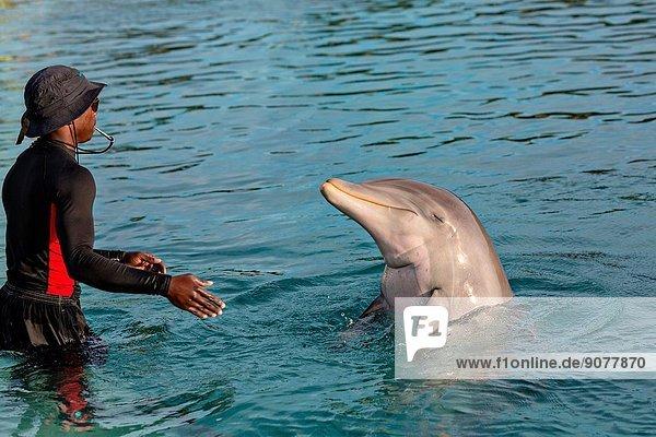 Atlantis Resort & Casino Dolphin Cay Paradise Island Nassau  Bahamas.