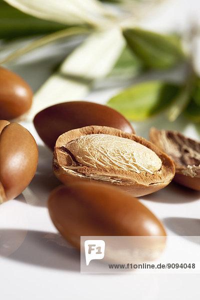 Argan-Nüsse und Blätter vom Arganbaum  Argania spinosa