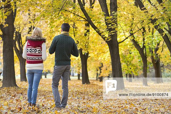 gehen  Herbst  Rückansicht  Ansicht  jung