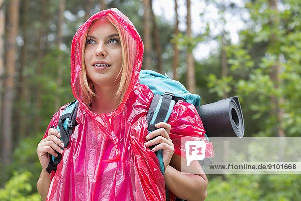 Regenmantel  Schönheit  sehen  Wald  Rucksackurlaub  wegsehen  Reise