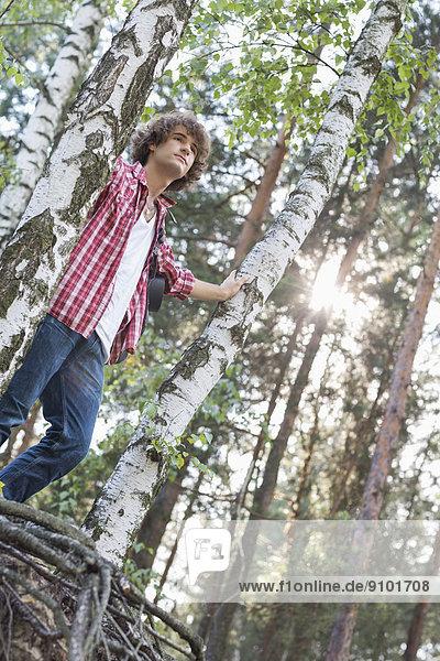 niedrig  stehend  Wald  wandern  Ansicht  Flachwinkelansicht  Winkel