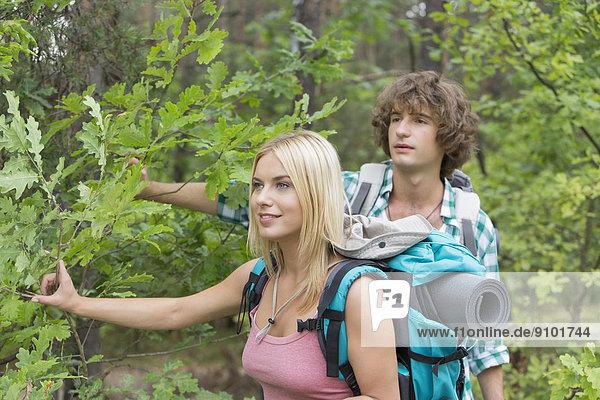 Wald  wandern  jung