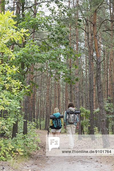 gehen  Wald  wandern  Rückansicht  Ansicht