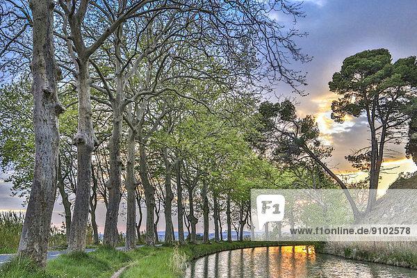 Platanenallee am Canal du Midi  Poilhes  Region Languedoc-Roussillon  Frankreich