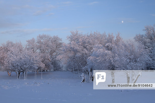 Winter atmosphere in the evening  Strohauser Plate  island in the Weser River  Lower Saxony  Germany