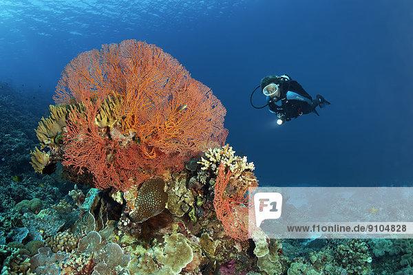 Pazifischer Ozean Pazifik Stiller Ozean Großer Ozean