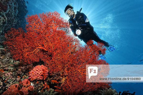 hinter Taucher binden Pazifischer Ozean Pazifik Stiller Ozean Großer Ozean Weichkoralle