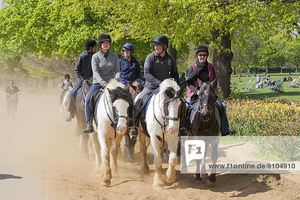 Gruppe von Reitern  Reitweg im Hyde Park  London  Region London  England  Großbritannien