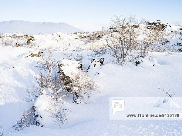nahe  Europa  Winter  See  Lava  Feld  Myvatn  Dimmuborgir  tief  Februar  Highlands  Island  Nordeuropa  Skandinavien  Schnee