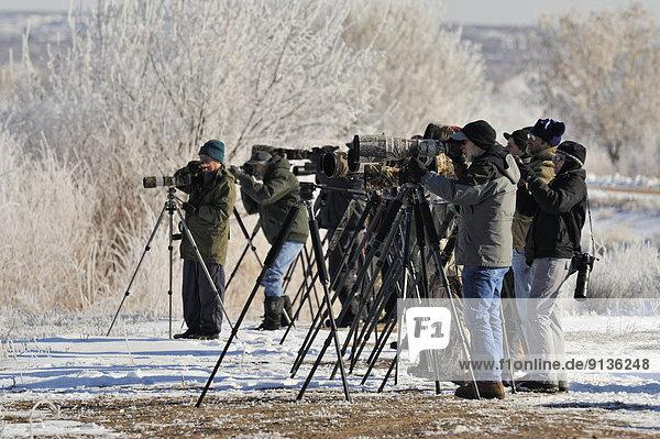Vereinigte Staaten von Amerika  USA  nahe  Fotograf  Gans  Erdhügel  New Mexico  Schnee