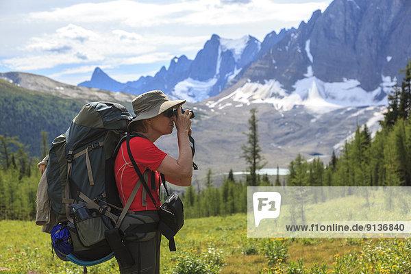 Vielfraß  Gulo gulo  nahe  Felsbrocken  Fotografie  nehmen  Wand  Rucksackurlaub  Hintergrund  Kootenay Nationalpark  British Columbia  Kanada