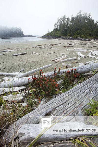 nahe Nationalpark Blume Strand ungestüm Insel Pazifischer Ozean Pazifik Stiller Ozean Großer Ozean Geräusch UNESCO-Welterbe Tofino British Columbia British Columbia Kanada Treibholz Radar Vancouver Biosphärenreservat