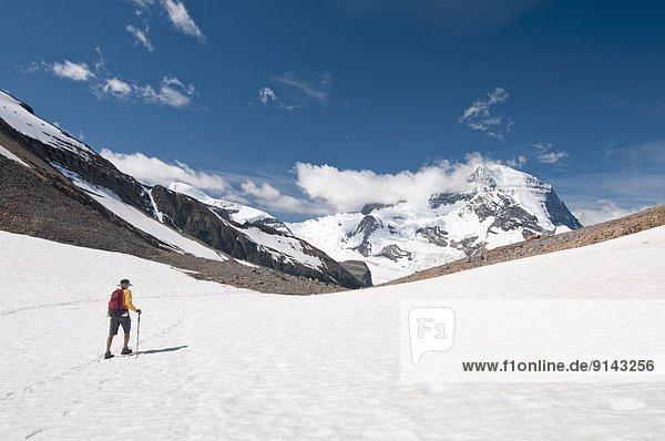 Ignoranz  wandern  Eisfeld  Mount Robson Provincial Park  British Columbia  Kanada