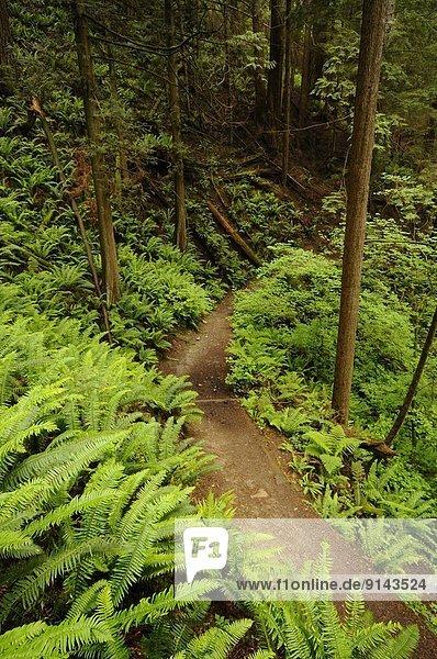 folgen  Stilleben  still  stills  Stillleben  Fluss  Region In Nordamerika  Vancouver  British Columbia  Kanada  Regenwald