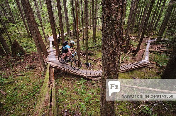 Mountain biking in Cumberland  Vancouver Island  British Columbia  Canada