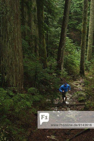 Bruder  folgen  rennen  Bach  Hollyburn Mountain  British Columbia  Kanada
