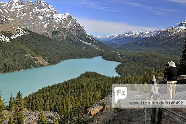 aufspüren  Tourist  See  Terrasse  Peyto Lake  Banff Nationalpark  Alberta  Kanada