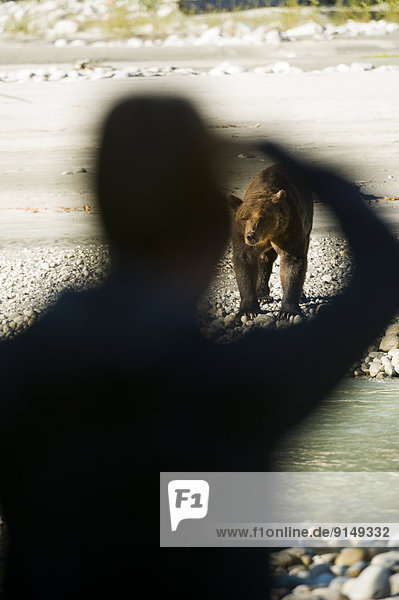 Grizzlybär  ursus horibilis  Grizzly  nahe  Fotograf  British Columbia