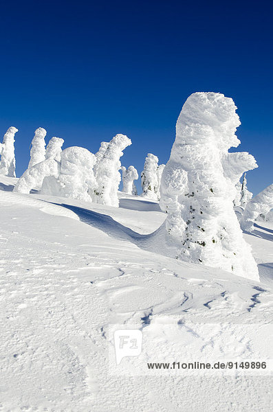 bedecken Baum Geist British Columbia Kanada Schnee