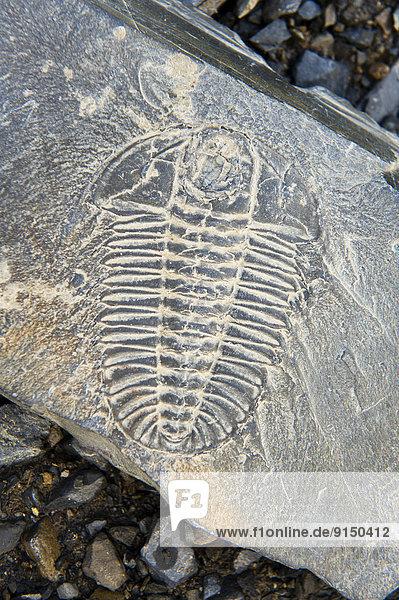 hoch  oben  Bergwerk  Grube  Gruben  Yoho Nationalpark  Fossil