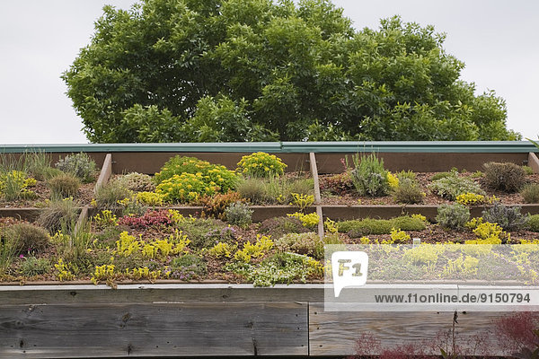 Dach Wachstum Pflanze Vielfalt Garten Frühling Laval Quebec Kanada Quebec