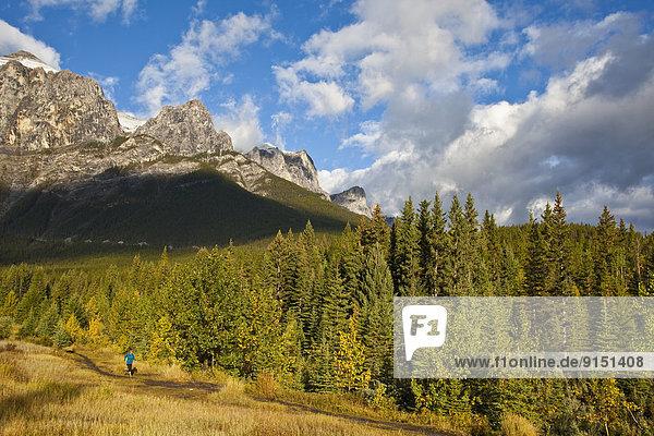 Morgen  folgen  rennen  früh  jung  Canmore  Alberta