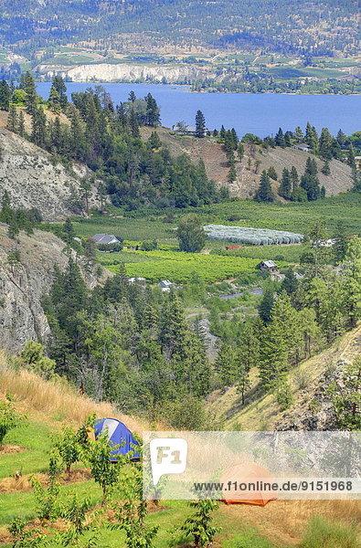 Anschnitt See Hintergrund Zelt Fokus auf den Vordergrund Fokus auf dem Vordergrund Ansicht 2 Welpe British Columbia Kanada